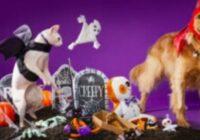 Petco Halloween Contest